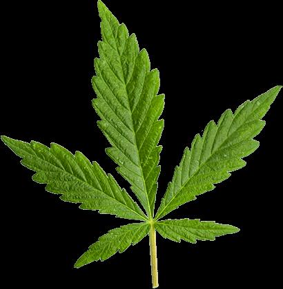 https://socbd.fr/wp-content/uploads/2018/12/marijuana_leaf_large.png